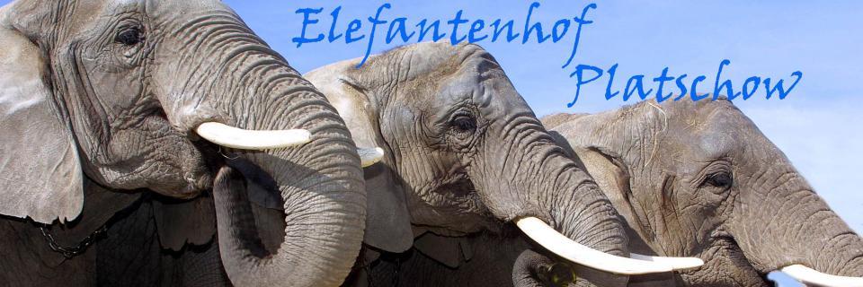 Freier Eintritt für Kinder bis 16 Jahren im Elefantenhof Platschow