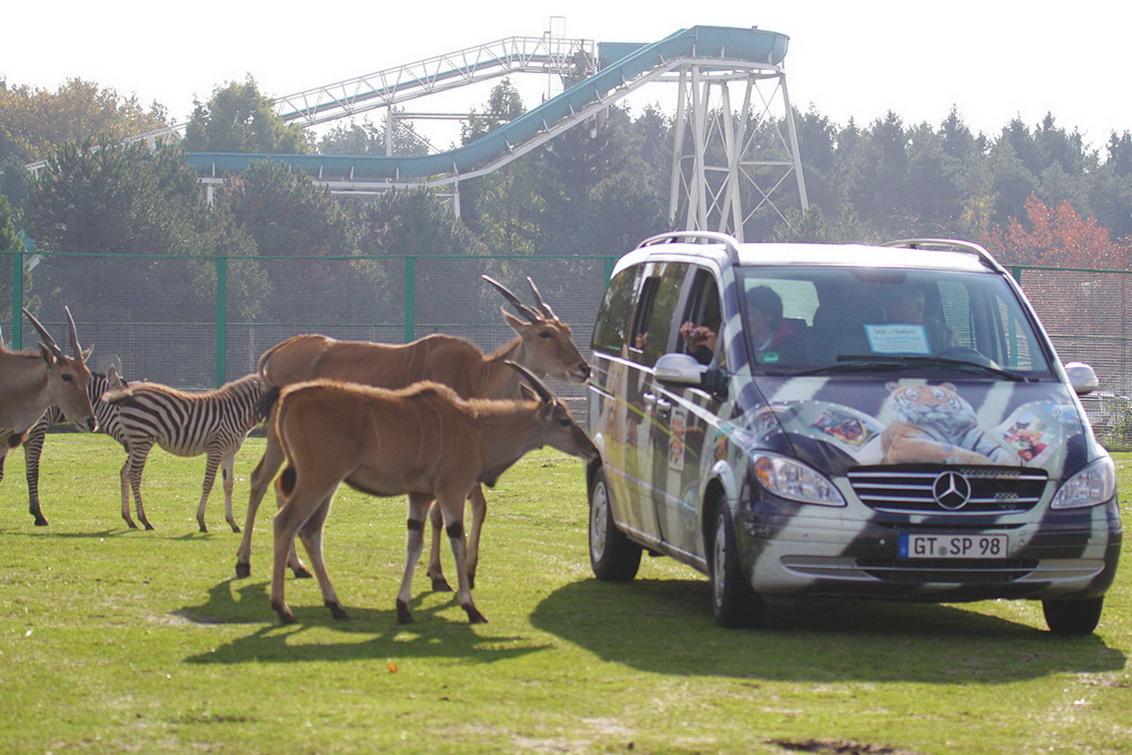 1 Ticket für den Safaripark in Schloss Holte-Stukenbrock inkl. Nutzung aller Attraktionen