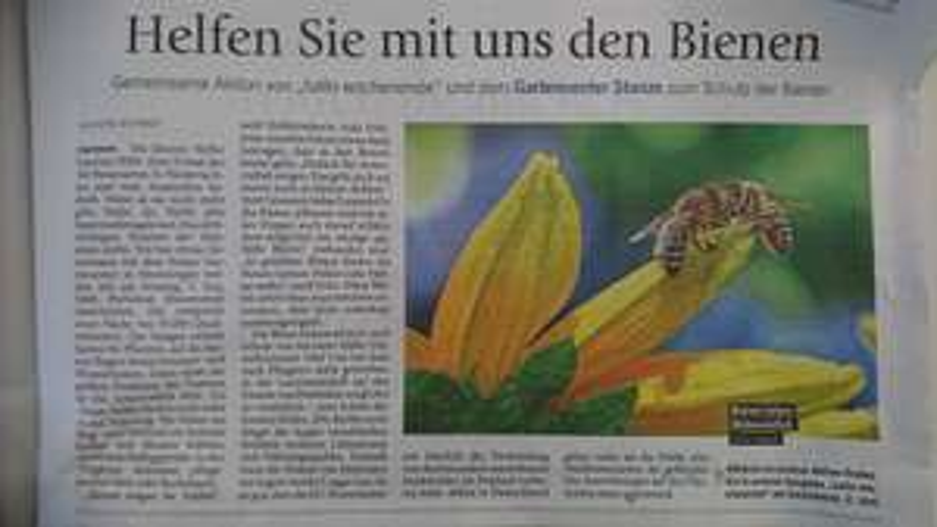 [Lokal Hannover] Stanze Gartencenter verschenkt 5000 Portionen Saatgut Bienenweide