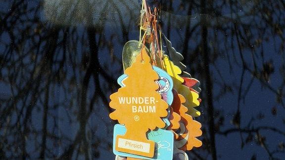 Wunderbaum verschiedene Sorten zum Tiefstpreis durch Bauhaus Tiefpreisgarantie