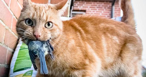 Kostenlose Katzen-Ratgeber zum Download