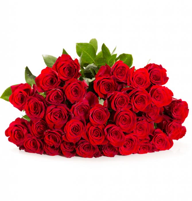 """Alles für die Liebe: 50 rote Rosen """"Classic Red"""" bei Blume Ideal"""