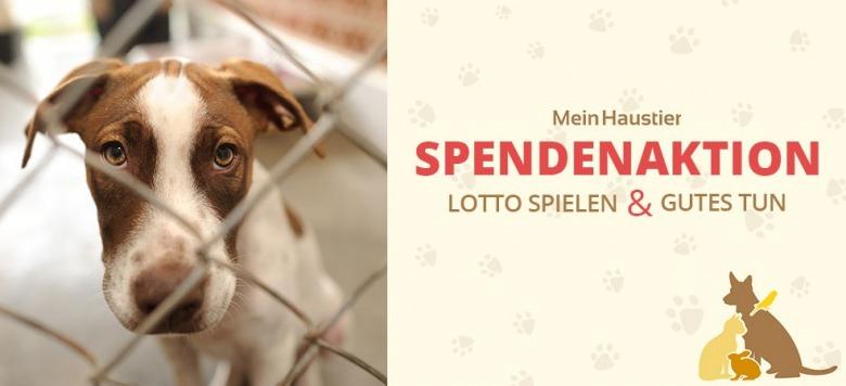 Lotto spielen und Gutes tun: Tierheim-Spendenaktion bei Mein Haustier