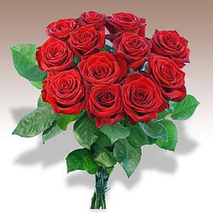 12 langstielige rote Rosen