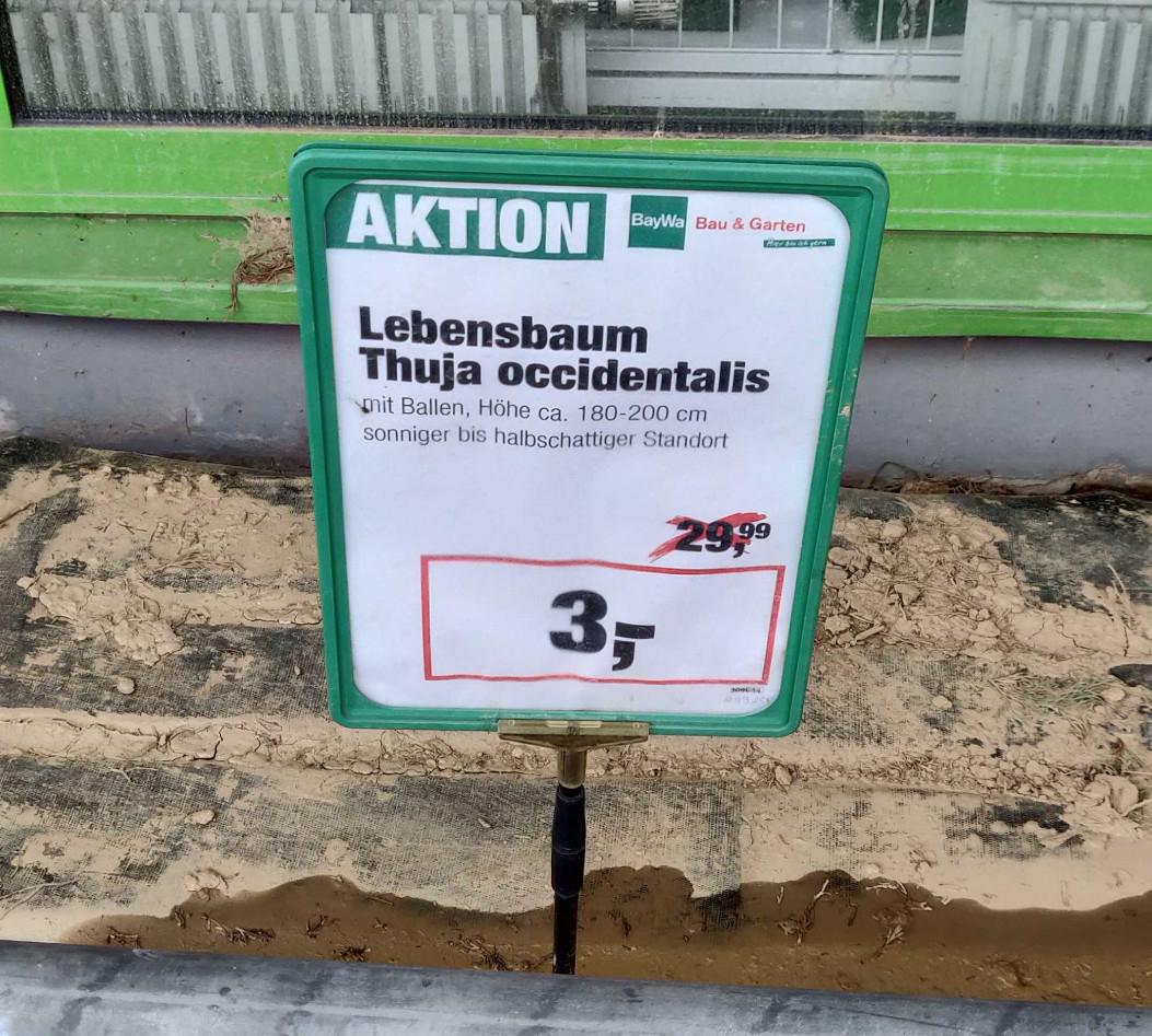 Lebensbaum 180-200cm (Lokal) 3€