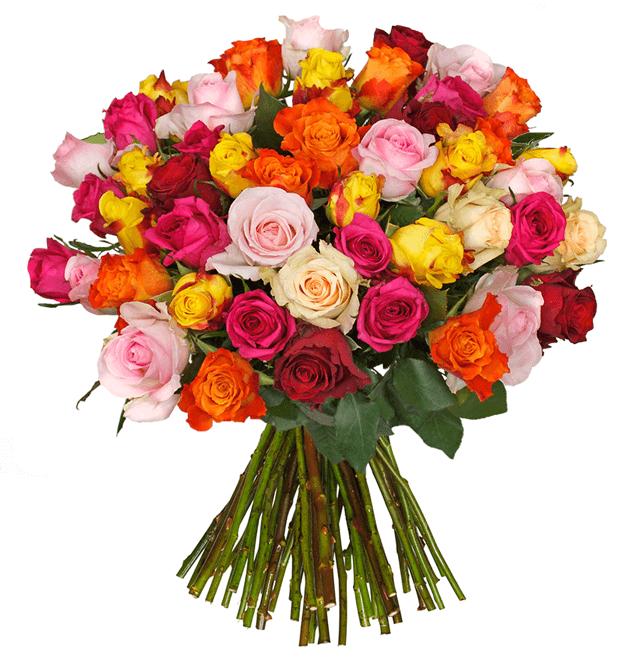 44 bunte Rosen mit 50cm Stiel / inkl. Versand / Stückpreis 0,50€