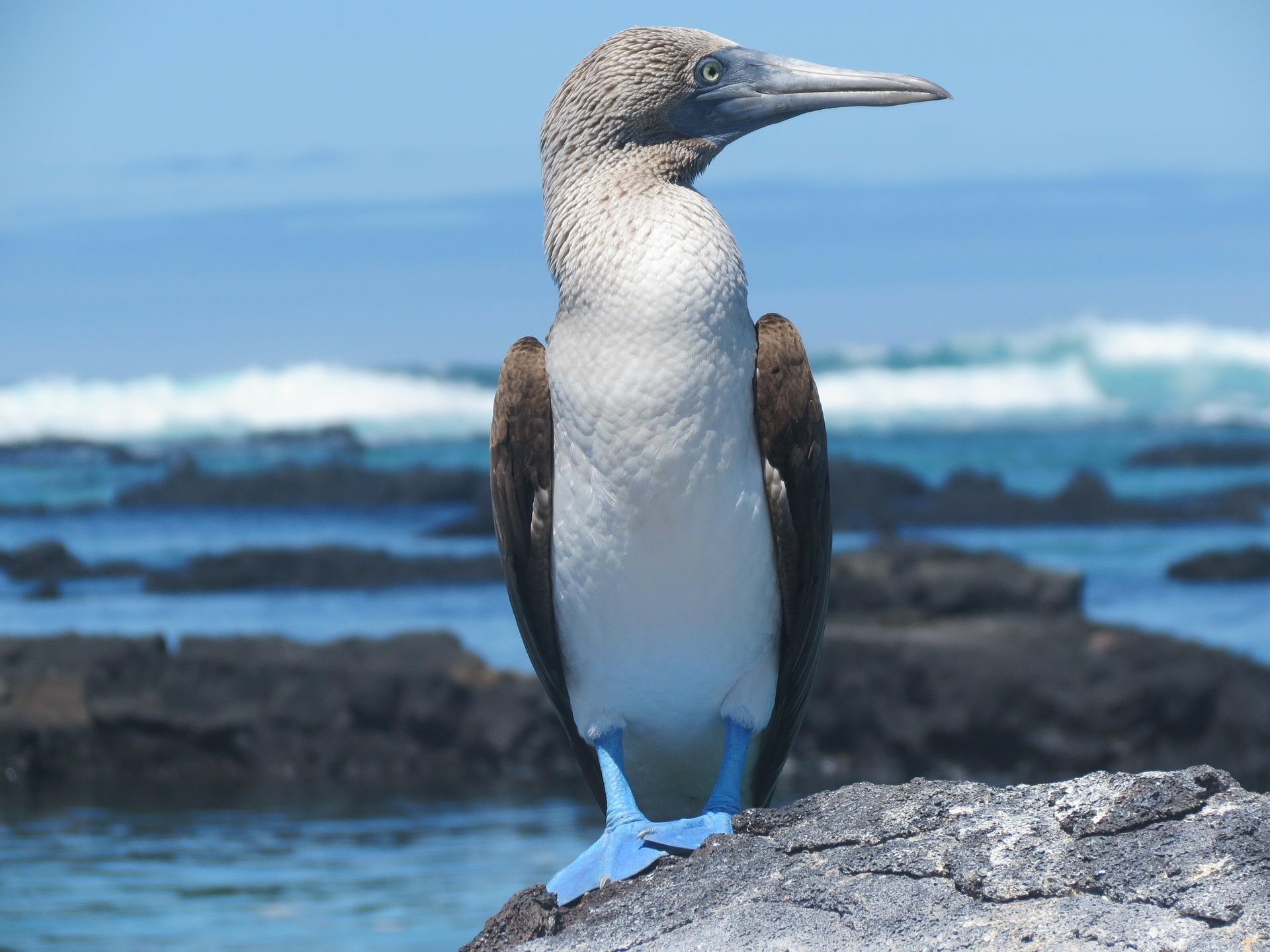 Flüge: München (MUC) -> Galapagos/Ecuador (GPS) im November/Dezember (Hin- und Zurück) ab 630€ inkl. Gepäck
