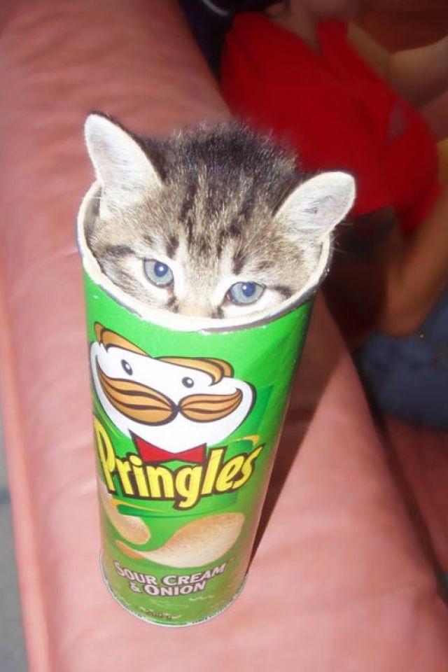[LIDL: 26.7 - 28.7] Pringles