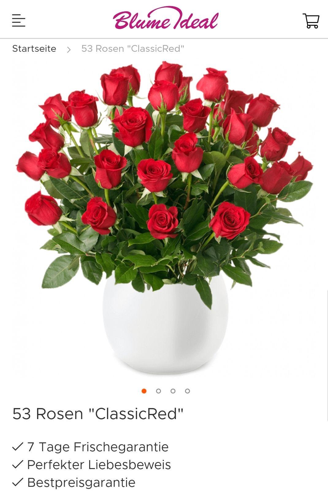53 Rosen für nur 19.99 + Versand