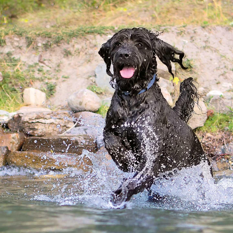 Hunde- & Katzenfutter 4 Wochen Gratis Testen - Bis zu 75€ Geld zurück!
