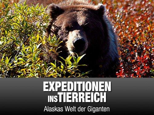 Expeditionen ins Tierreich - (Staffel 10\21Folgen) für 1,49€ (SD) zum KAUFEN [Amazon Video]