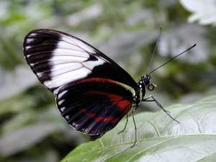 [Radio Brocken, Lutherstadt Wittenberg] Freier Eintritt in den Schmetterlingspark Alaris