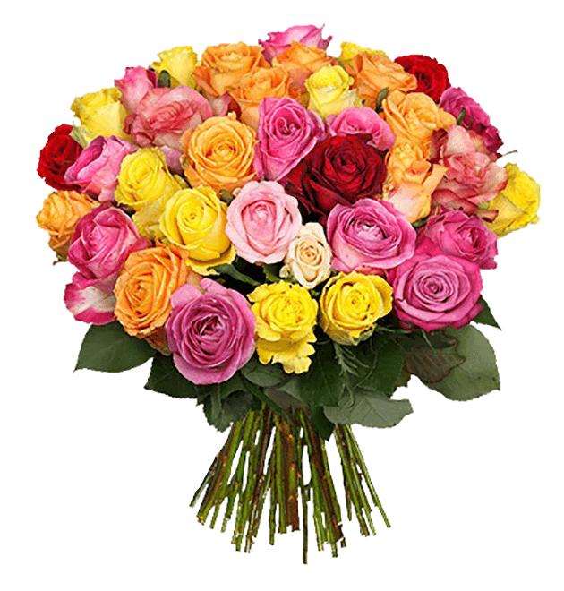 [BlumeIdeal] 31 Rosen für 18,89€ (inkl. Versand)