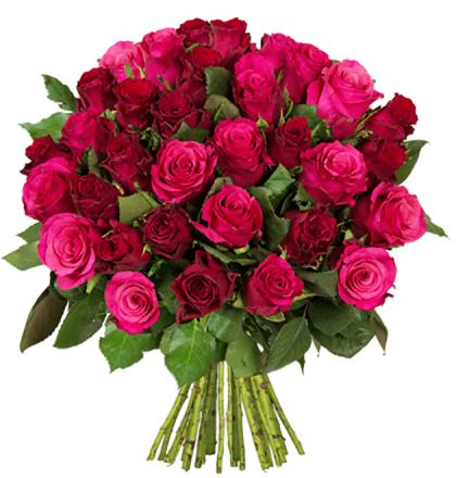 45 Rosen mit 50cm Stil für 22,58€ inkl Versand // 50 bute Gerbera für 18,18€ // 44 Inkalilien für 20,82€