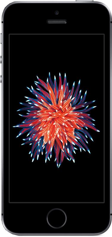 Preisboerse24:  iPhone SE 128GB mit 5 GB Allnet im Vodafone LTE Netz