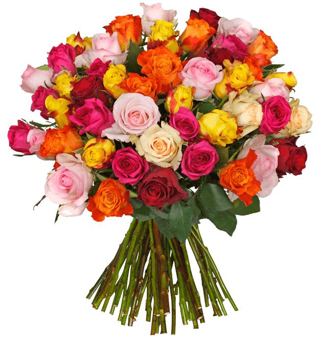 """50 """"SweetRoses"""" für 22,99€ + 4,99€ Versand [Blume Ideal]"""