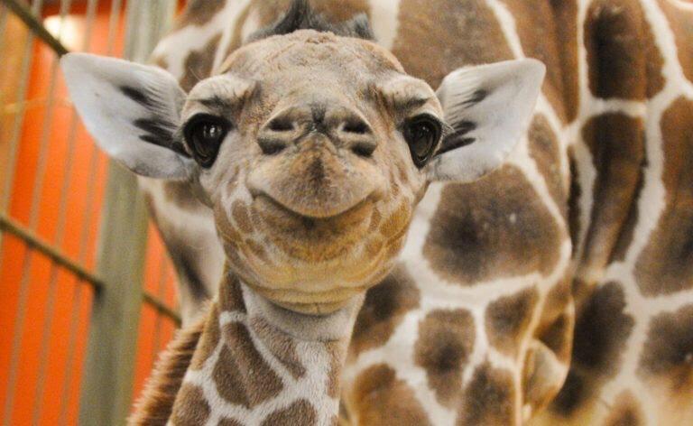 [lokal] Zoo Leipzig 08.09.2018 freier Eintritt für Kinder bis 16 Jahre