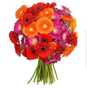 41 bunte Gerbera + Shoop