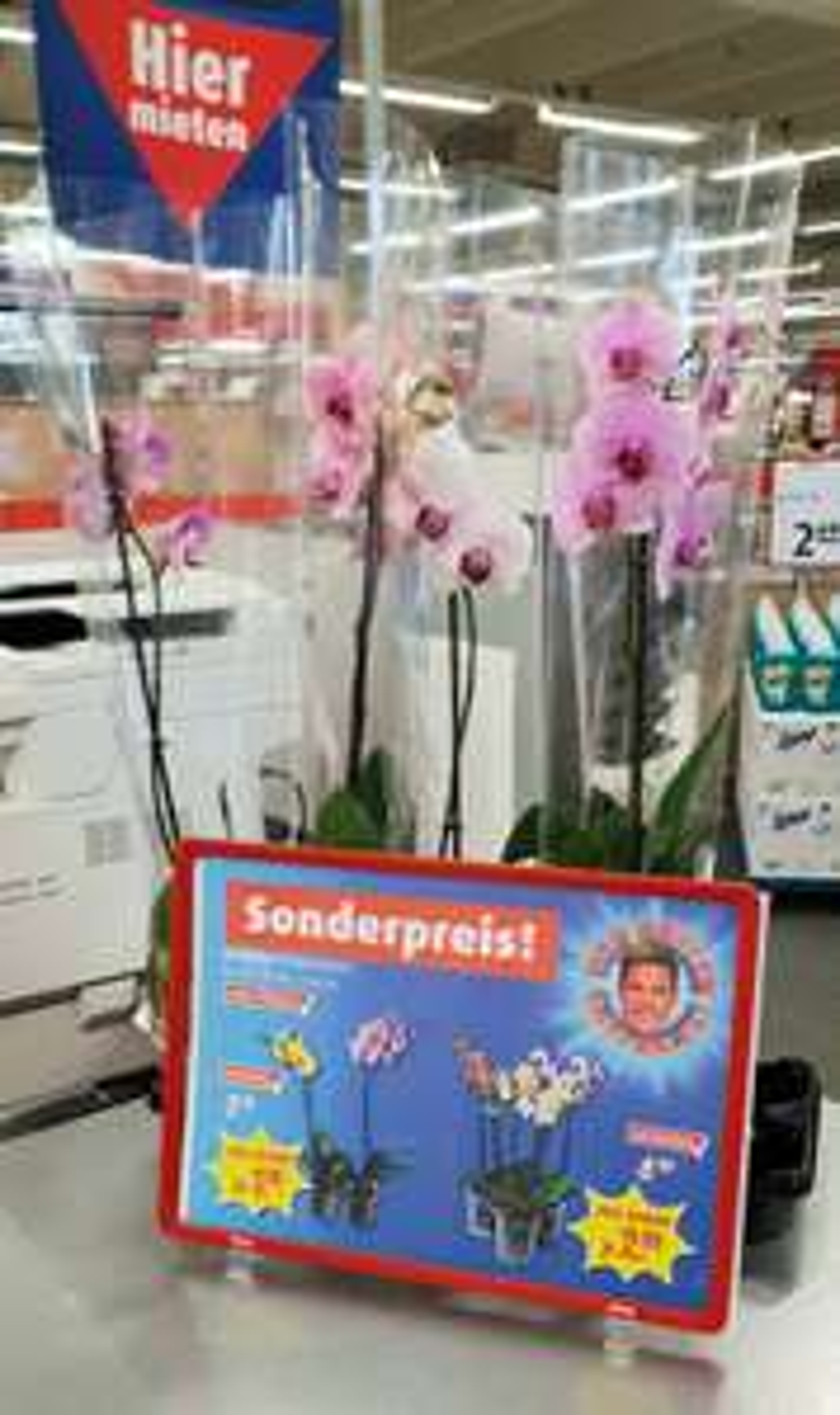 Orchidee Phalaenopsis 40-50cm bei Roller für nur 1,99€ [Nur Hanau?]