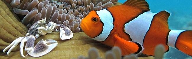 Meerwasser Aquaristik Zubehör 20% auf ALLES - Nischendeal frotschershobbyshop
