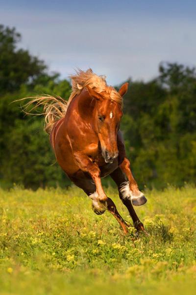 Pferdefutter – Bestellen Sie eine kostenlose Probe für Ihr Pferd