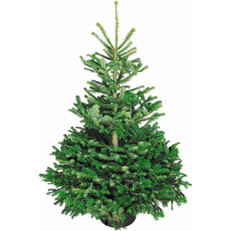Lottoland: Gratis Weihnachtsbaum bei Abschluss eines LOTTO 6aus49-Abo