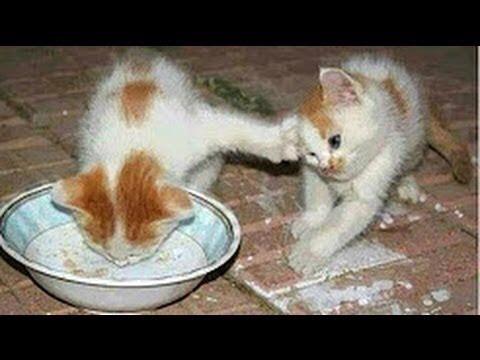 2 Katzenfutter Gratisprodukte von Purina Gourmet