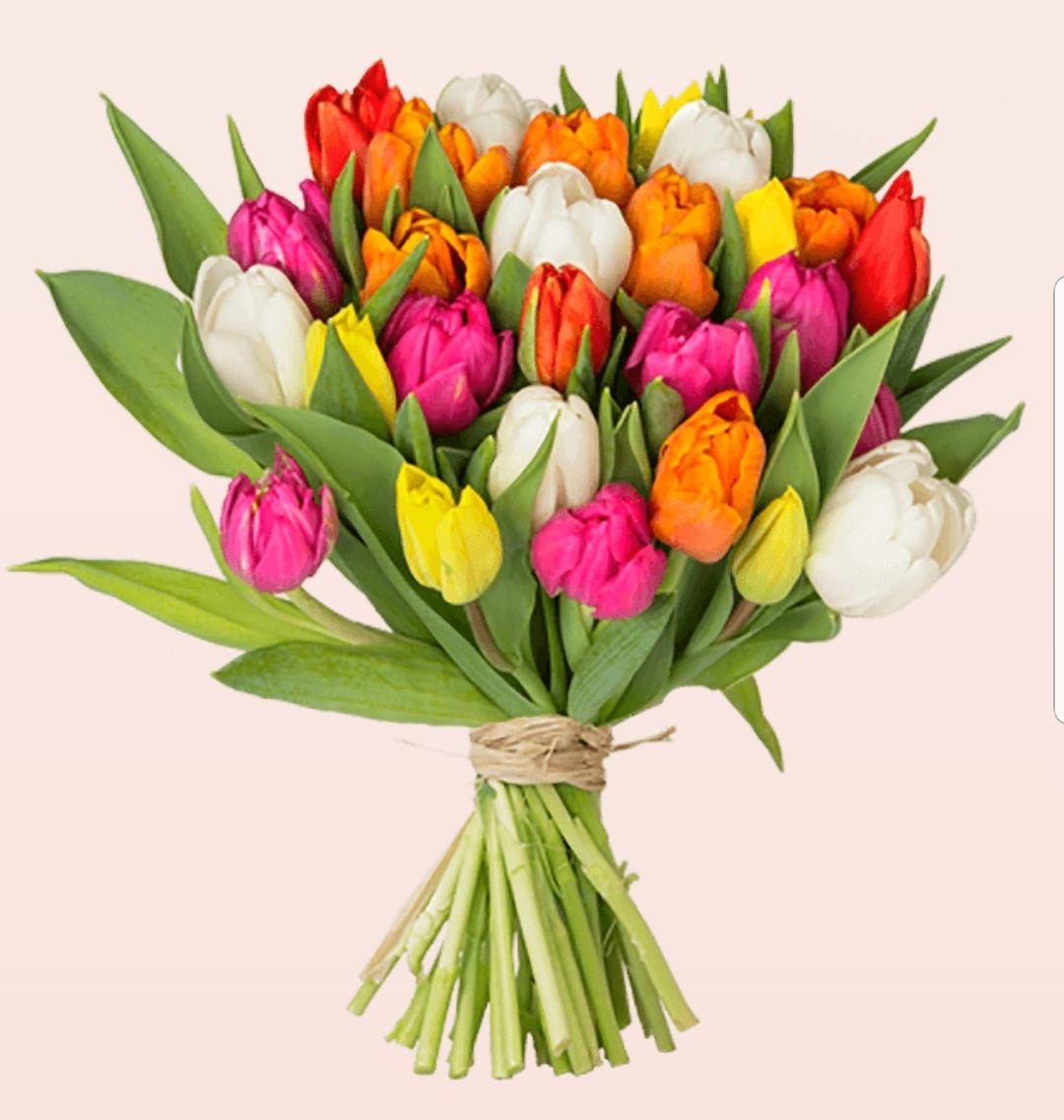 35 bunte Tulpen für 13,99€ zzgl. Versand, kombinierbar mit Shoop