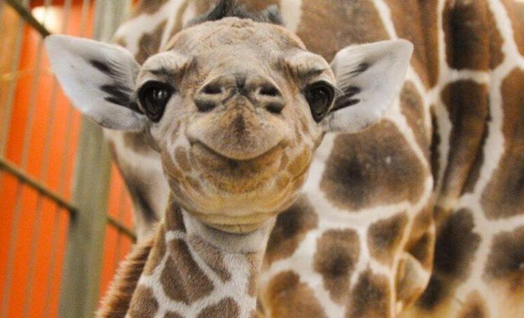 [lokal] Zoo Leipzig 23. & 24.03. freier Eintritt für Kinder bis 16 Jahre