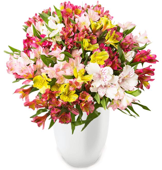 Blütenpracht bei BlumeIdeal: 44 Inkalilien (bis zu 400 Blüten) für 24.98€ inkl.Versand!