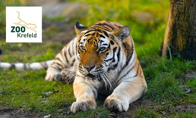 [Social Deal] Zoo Krefeld (NRW) Eintritt für 6,90€ statt 11,50€