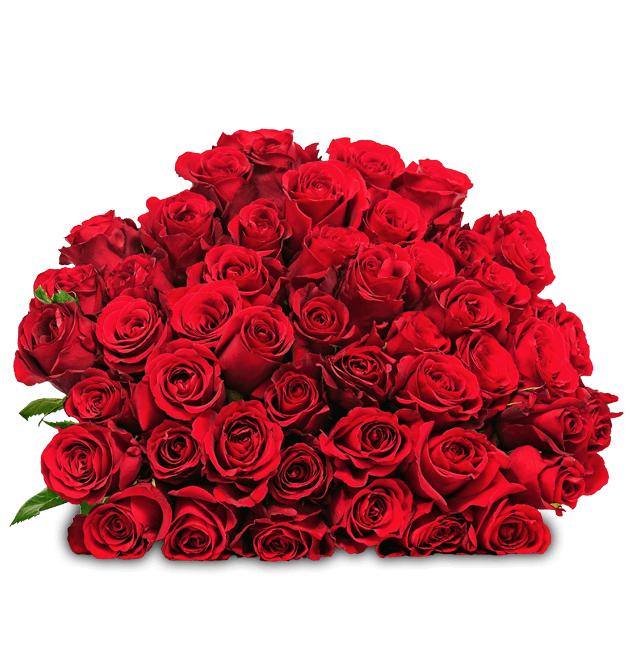 Blume Ideal: Blumenstrauß mit 44 roten Rosen (50cm Länge) für 24,98€