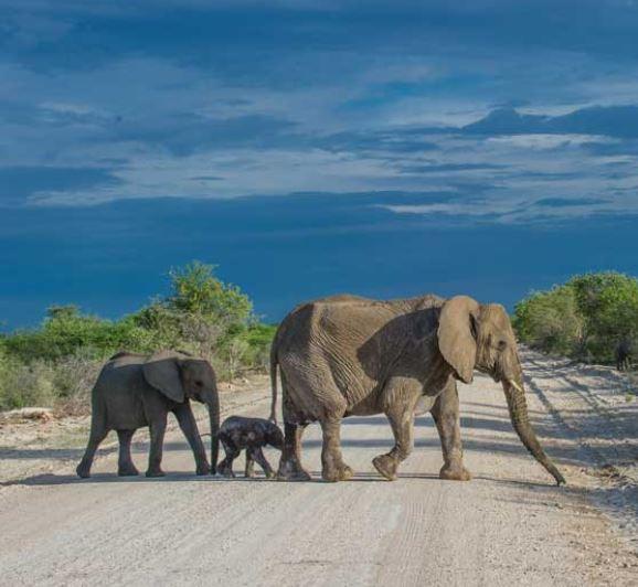 Flüge: Namibia [Juni] Hin und Zurück mit Condor von Frankfurt nach Windhoek ab nur 379€ inkl. Gepäck