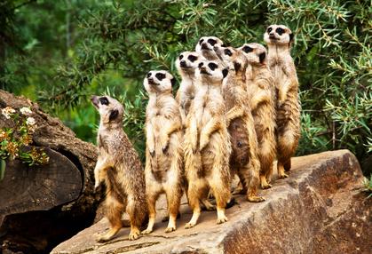 [LOKAL Karlsruhe] Kostenloser Eintritt in den Zoo am Familientag (DRK, AOK, CIK)