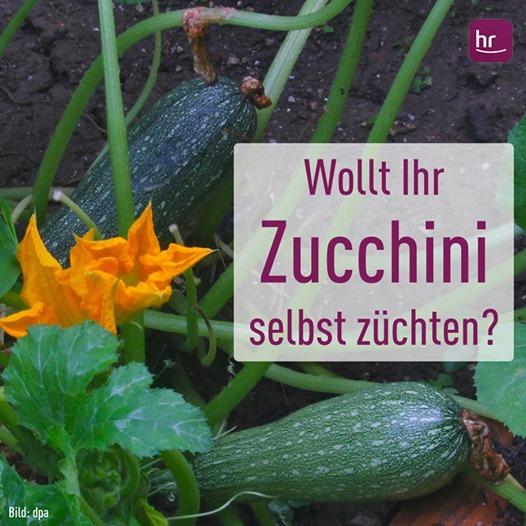 """""""hallo hessen"""" schenkt Ihnen Ernteglück für Balkon und Garten"""