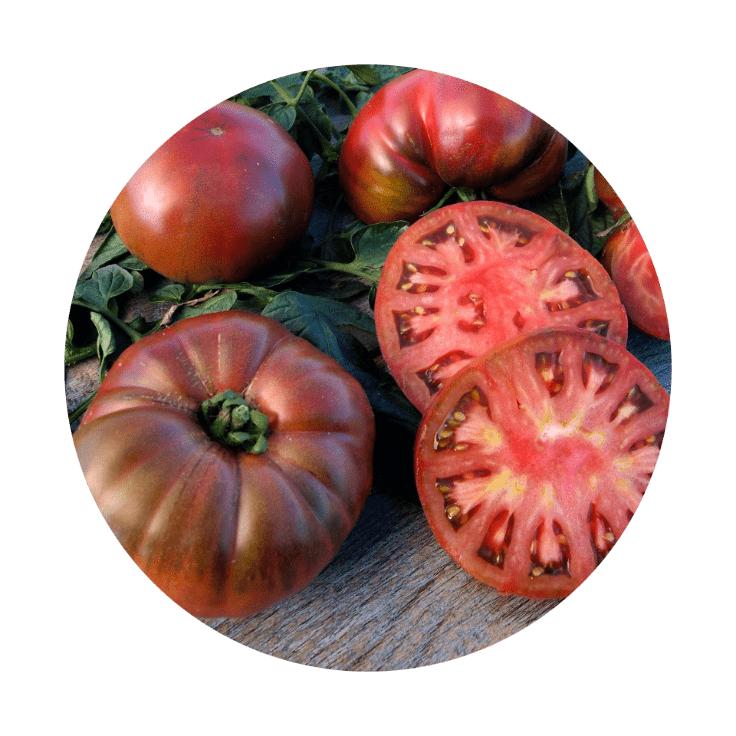 "Tomatenpflanzen ""Alte Sorten"" (6 Stück -verschiedene Sorten) - [Aldi Nord]"