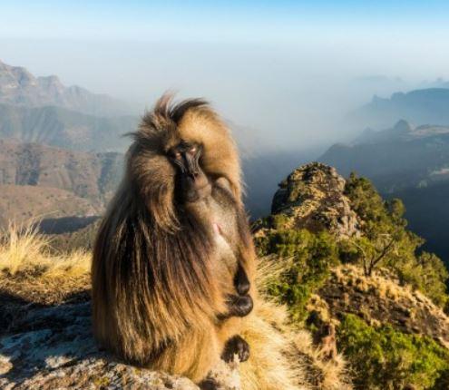 Flüge: Äthiopien [Nov. - Dez.] Hin und Zurück von Berlin, Frankfurt, München nach Addis Abeba ab 354€ inkl. Gepäck