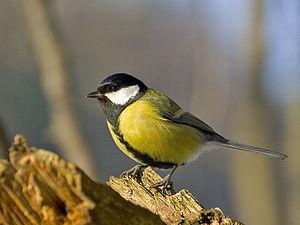 Der nächste Winter kommt bestimmt - Vogelfutter bei Hornbach bis zu 90% reduziert