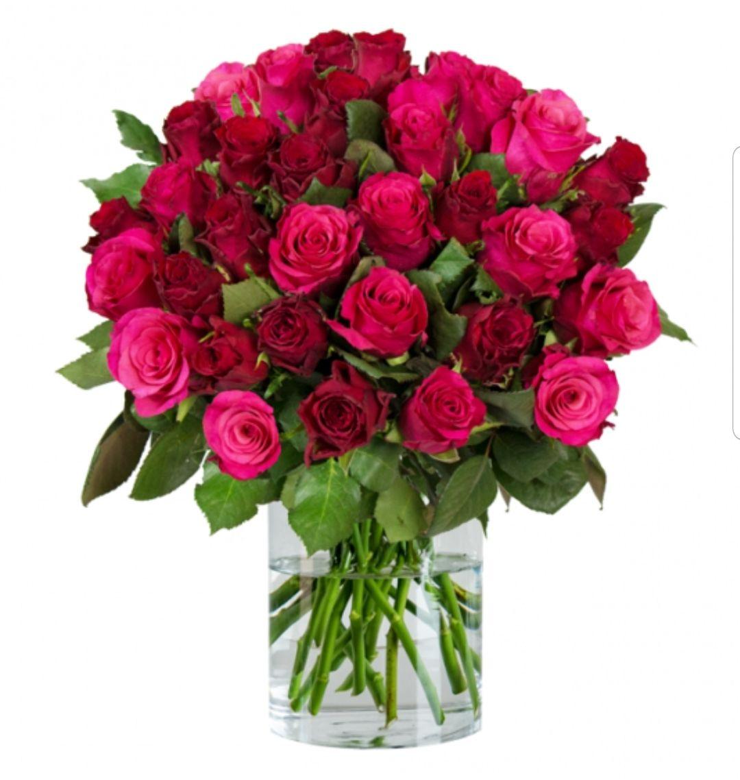 [BlumeIdeal] 35 Romantic Rosen