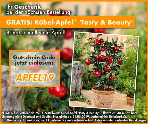 BALDUR-Garten - Kübel-Apfel 'Tasty & Beauty' kostenlos mit bestellen ab 25 € Bestellsumme