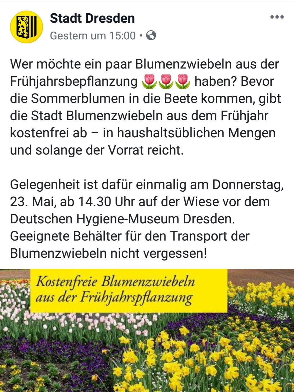 Gratis Blumenzwiebeln in Dresden