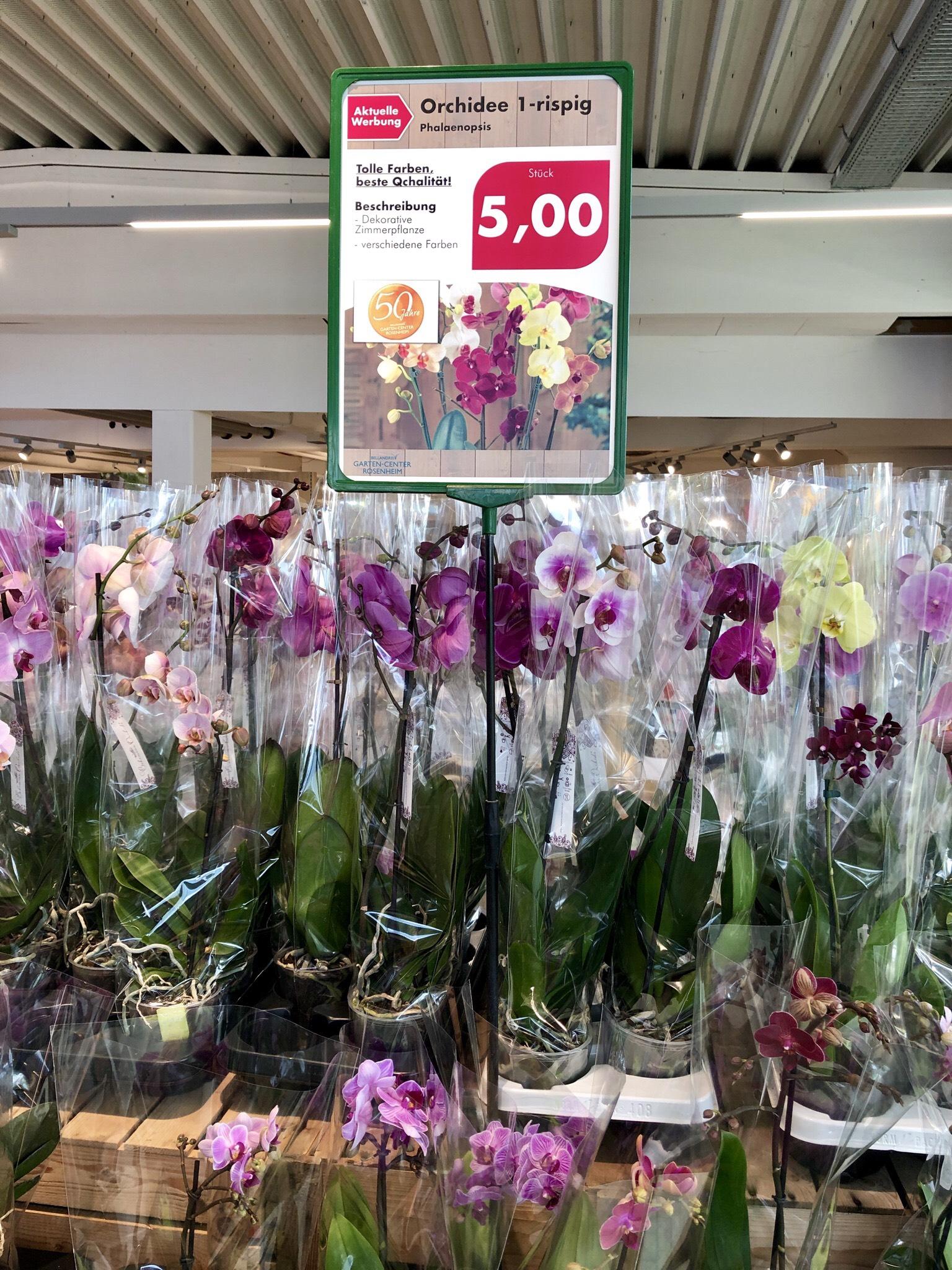 Orchideen für 5,- in Rosenheim