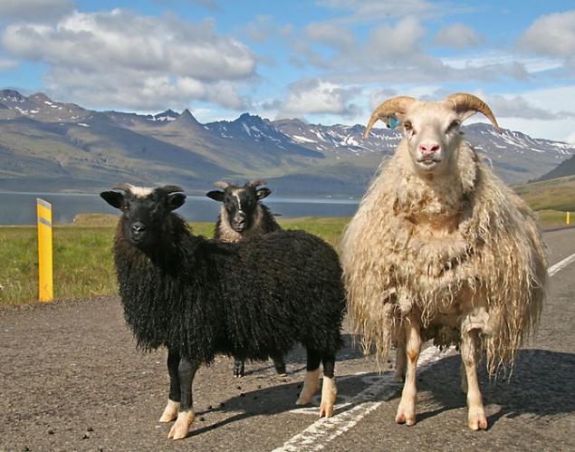 Flüge: Island ( Oktober ) Hin- und Rückflug von Basel nach Keflavik ab 78€
