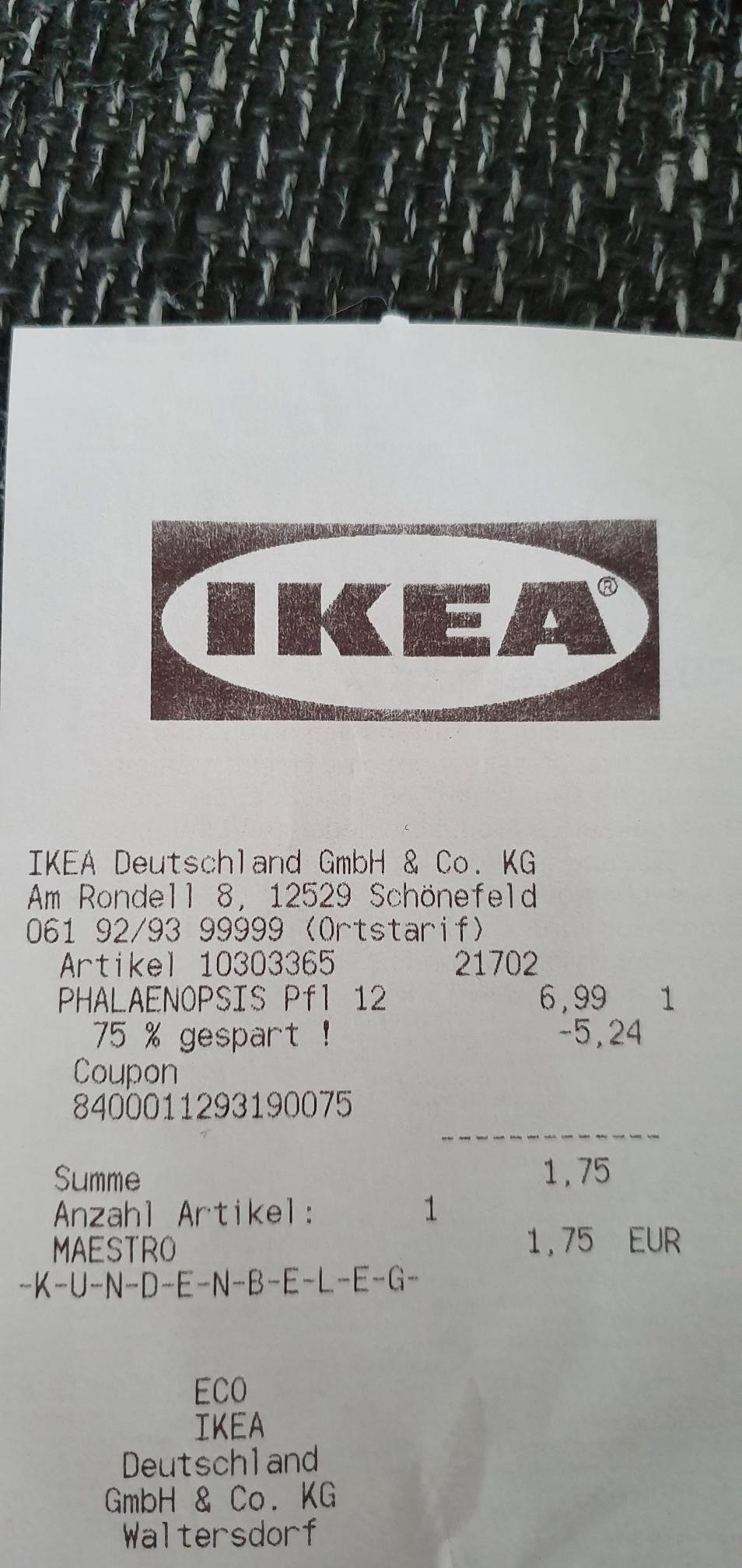 IKEA Orchidee Phalaenopsis 12cm Topf ( LOKAL Waltersdorf )
