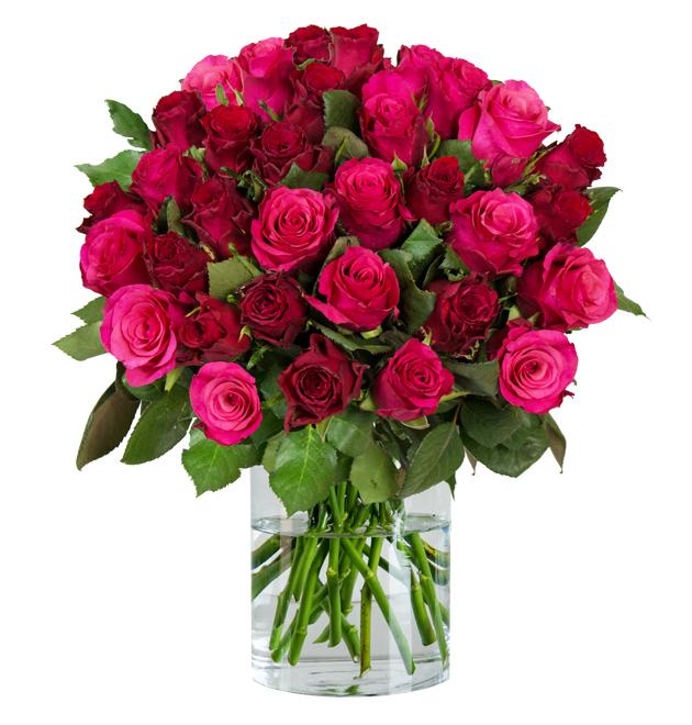 Blume Ideal - 35 Rosen, 50cm Länge,  XXL Rosenstrauß