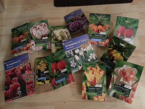 (Lokal: Stuhr-Brinkum, ev. auch andere) Toom BM: Alle Blumenzwiebeln 0,50€ statt 1,49-5,49€