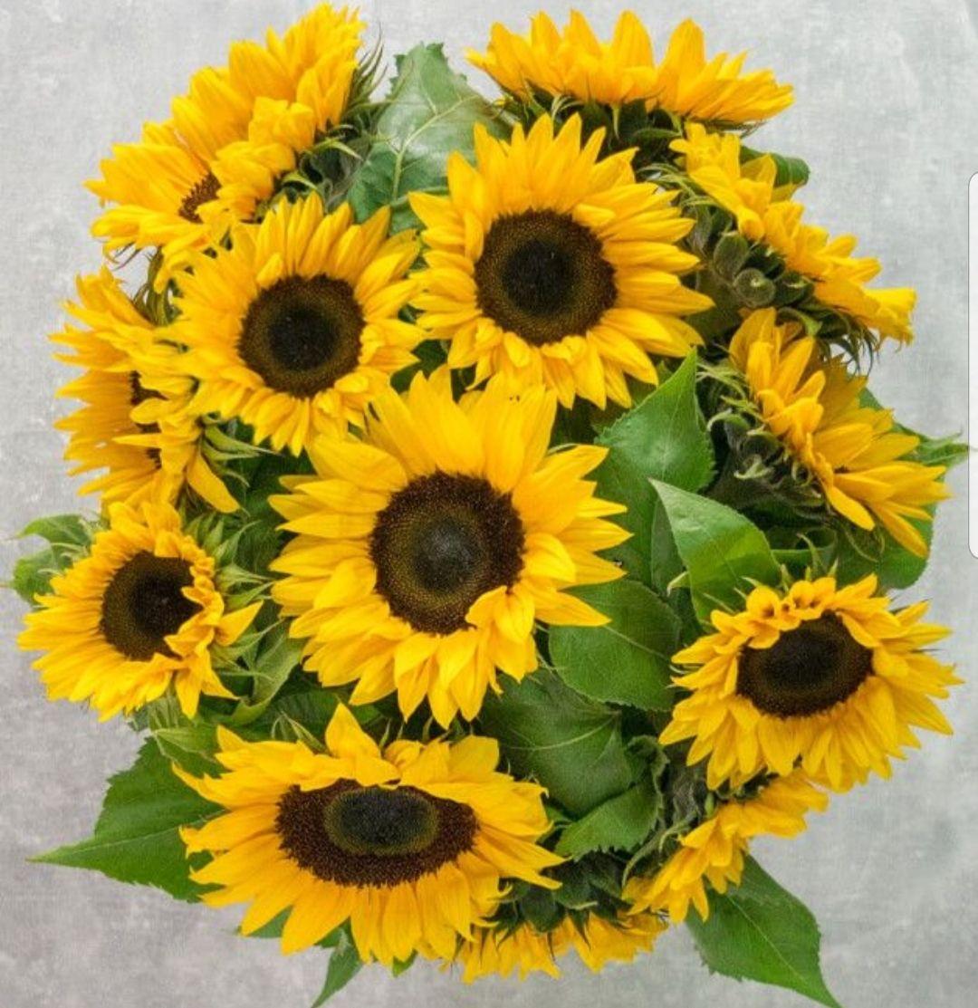 15 Sonnenblumen bei BlumeIdeal
