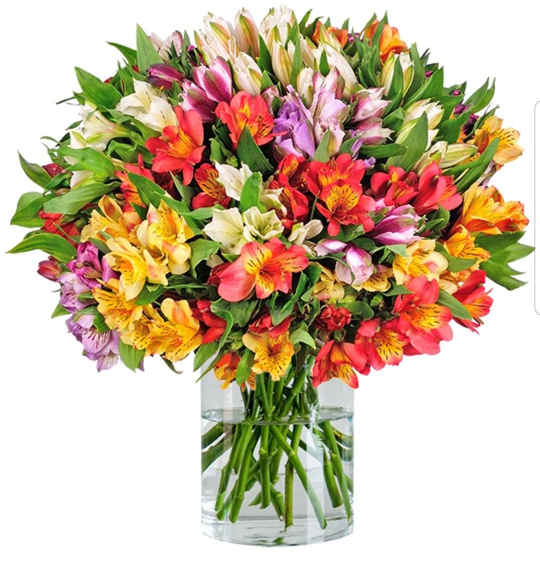 40 Inkalilien (Alstroemeria) bei BlumeIdeal + Shoop