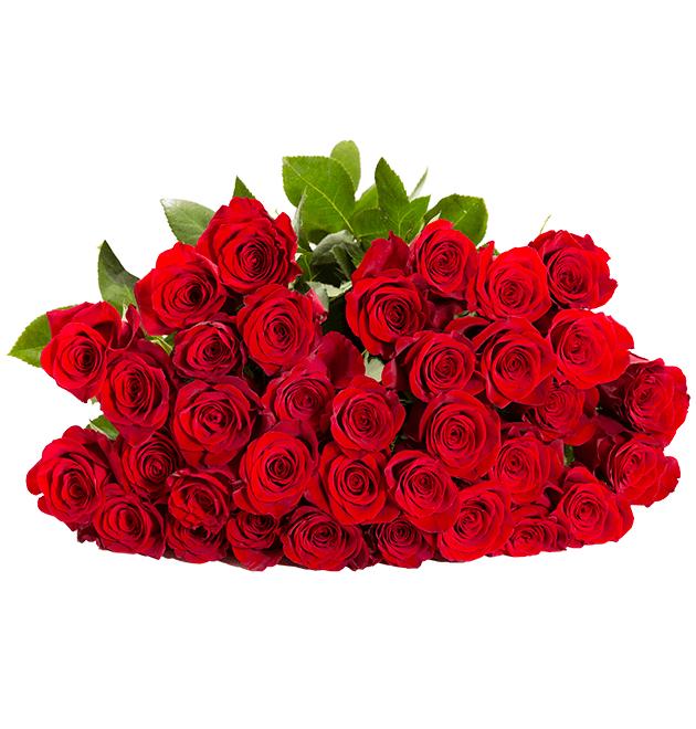44 rote Rosen