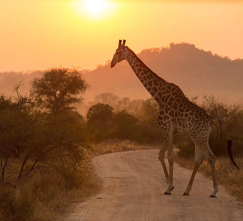 Flüge: Südafrika ( Sept - Mai ) Hin- und Rückflug von Hamburg, Düsseldorf, Berlin und München nach Johannesburg ab 348€